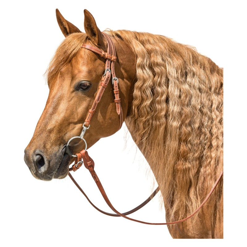 Bridon Western Cheval de Trait