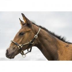 Licol Foal Clincher