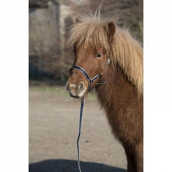 Licol Longe Lami Cell Foal