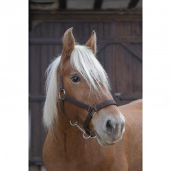 Licol Norton Pro Cheval de Trait