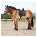 Bonnet Trait Big Horse
