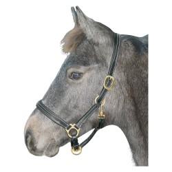 Licol Cuir Foal Shet Welsh